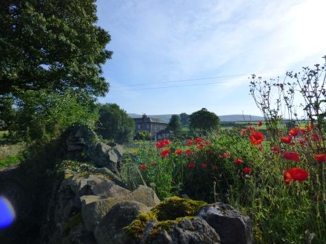 Poppy view.
