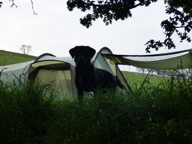 Hugo camping. :)