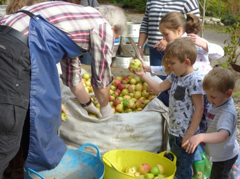 Enthusiastic helpers sorting the apples. :)