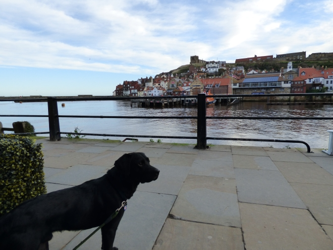 Hugo's Haunts ~ Dog Friendly Whitby.