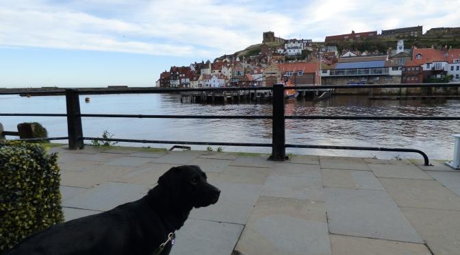 Hugo's Haunts ~ Dog Friendly Whitby.