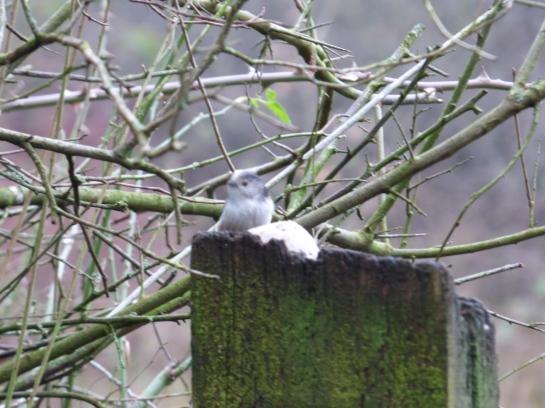 birds jan 015