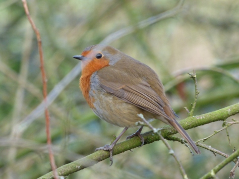 birdys spring feb 003