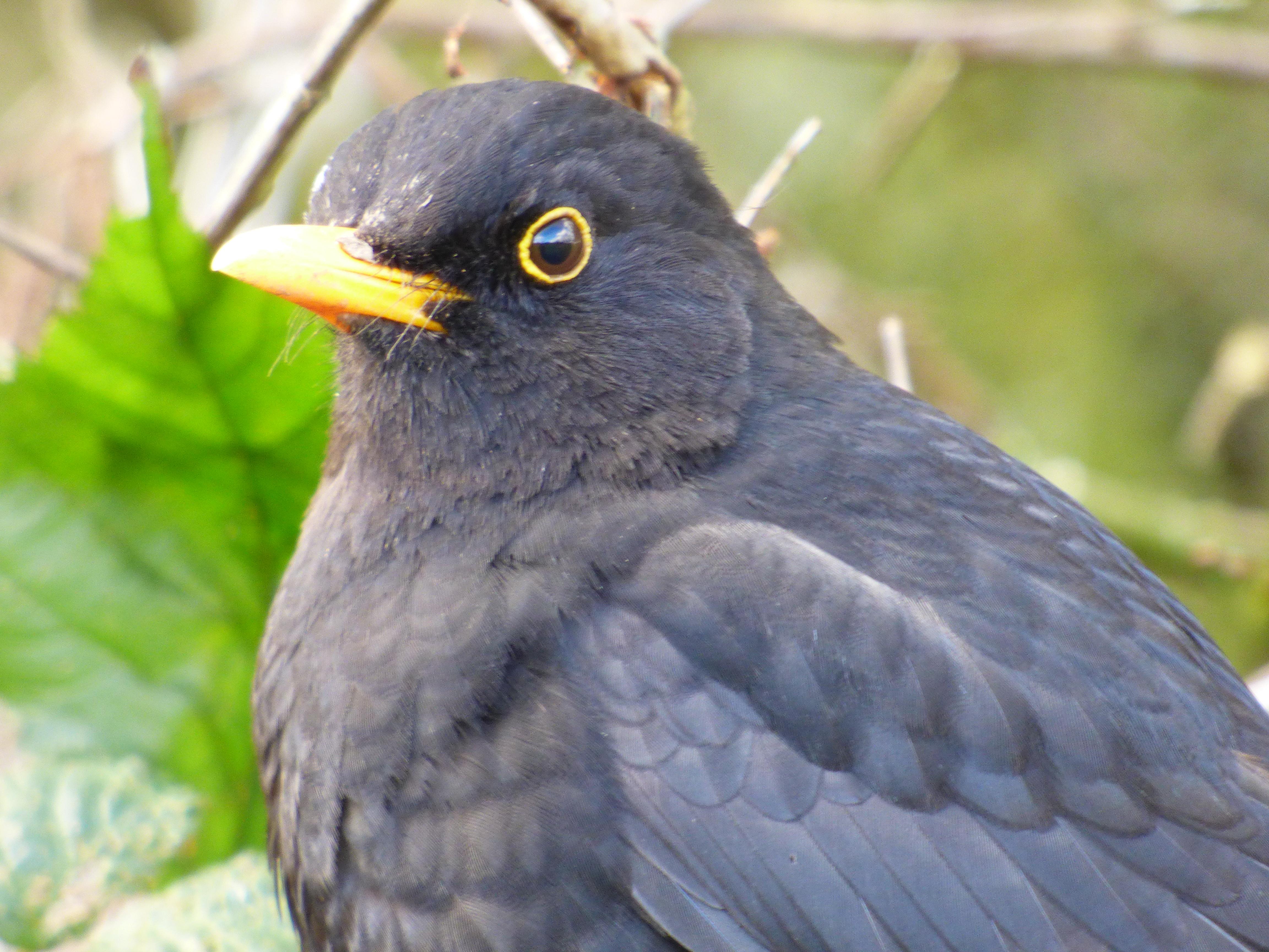 birdys spring feb 006