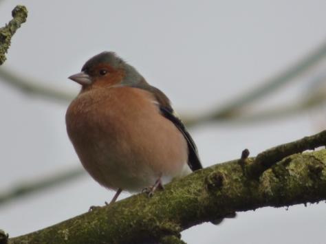birdys spring feb 007