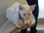 cat cafe manchester 007
