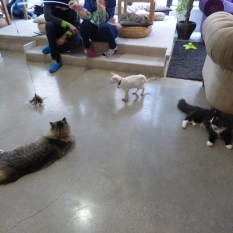 cat cafe manchester 008