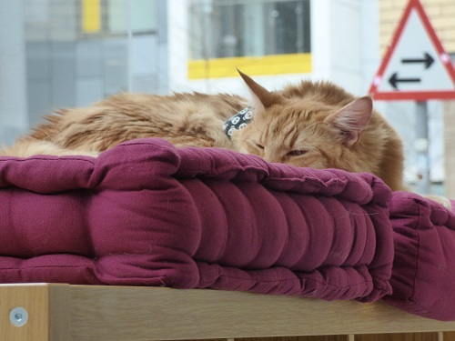 cat cafe manchester 015