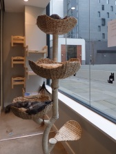 cat cafe manchester 019