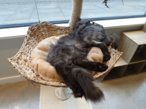 cat cafe manchester 020