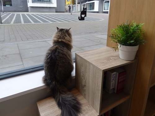 cat cafe manchester 036