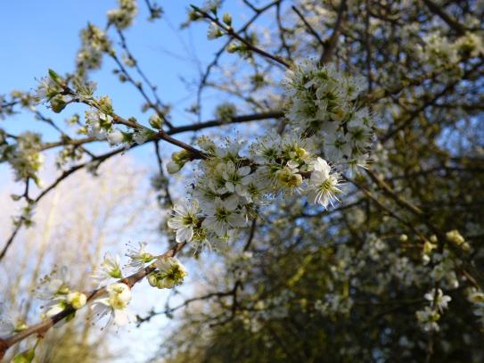 spring has sprung 006