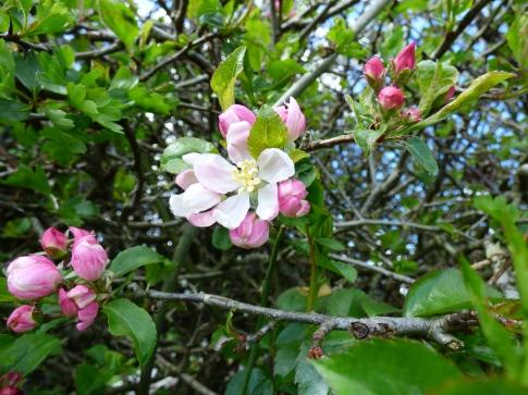 april nature 052