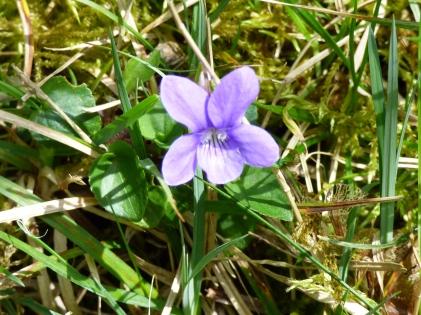 april nature 057