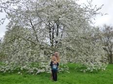 Spring Blossom In Green Park.
