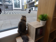 Cat Cafe Manchester.
