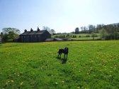 Hugo in a Downham meadow.