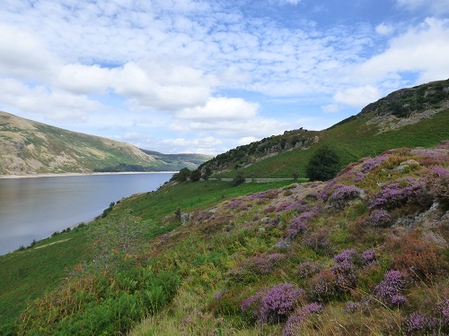 Heather and Haweswater.