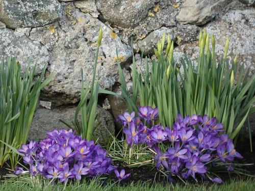 February Flora and Fauna.