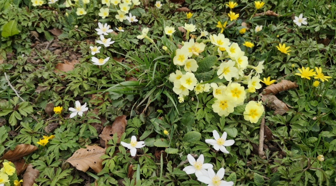 Early April ~ Wildflowers On A Walk.