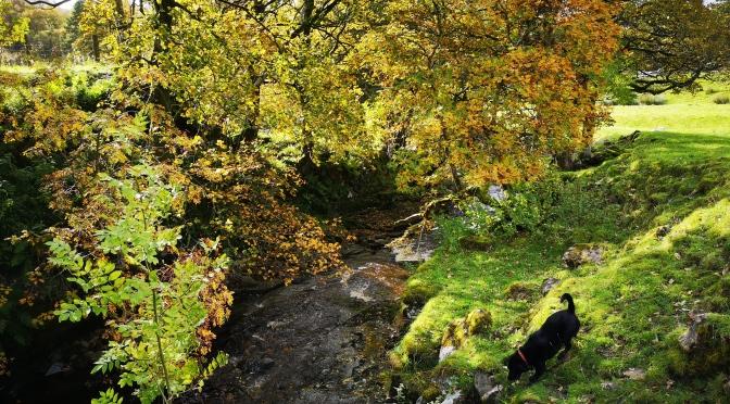 Garrigill to Ashgill Force walk  🥾🍁