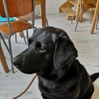 Dog Friendly Clitheroe. 🐶